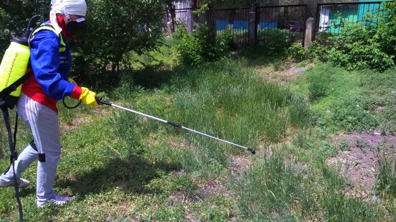 Обработка участка от клещей: акарицидные препараты для самостоятельной обработки садового участка