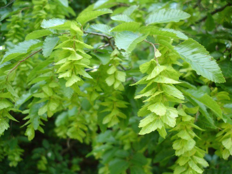 Декоративные кустарники для сада: список и особенности выращивания