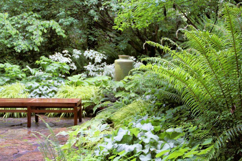 Папоротники садовые: посадка и уход, выращивание и пересадка