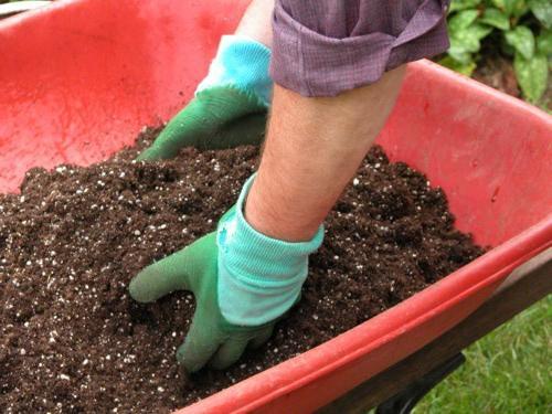 Выращивание клубники в теплице: агротехника выращивания клубники круглый год, оснащение теплицы, подходящие сорта