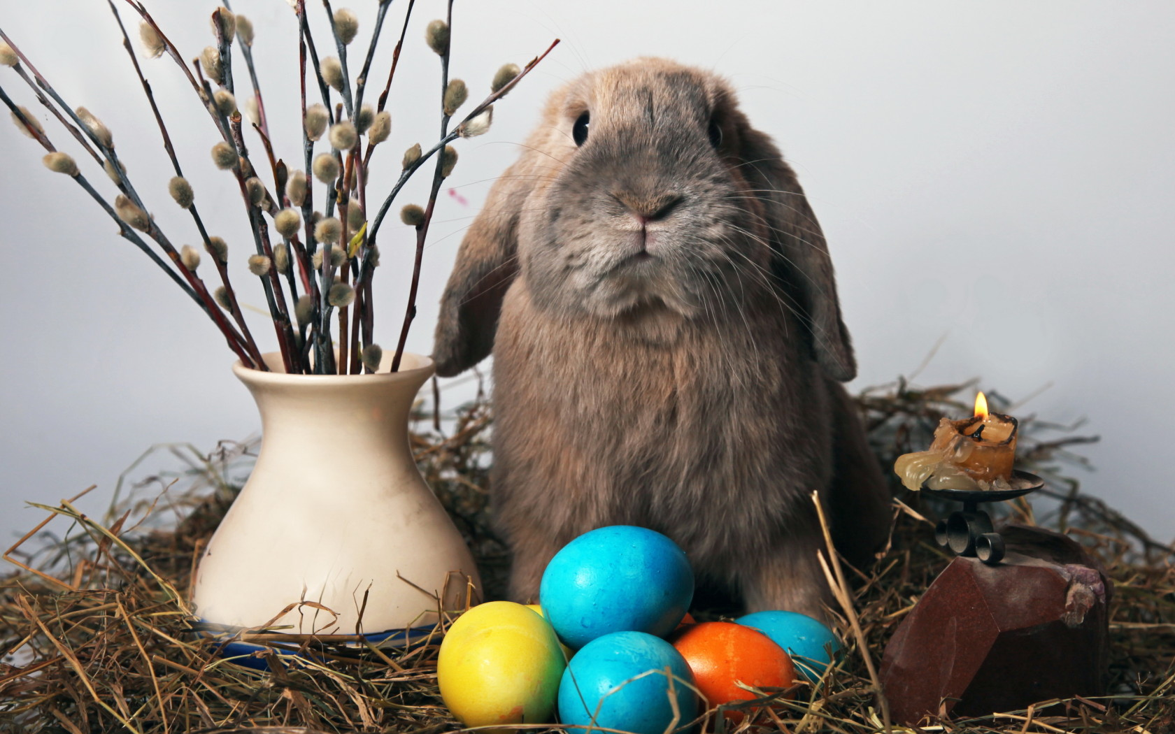 Holidays_Easter_Peaster_rabbit_020816_