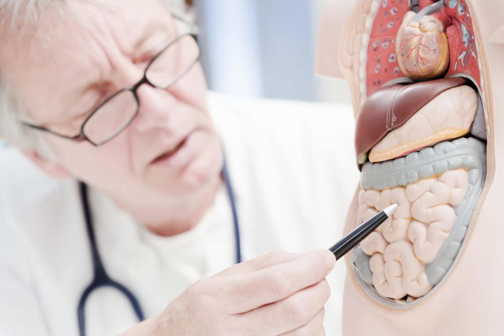Что лечит гастроэнтеролог, с какими симптомами обращаться к врачу взрослым и детям