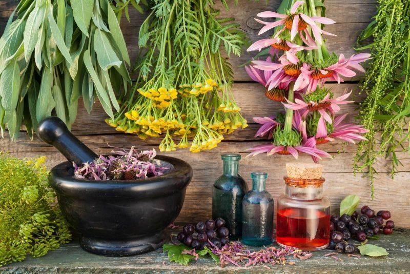Аконит джунгарский: как принимать для лечения? Свойства растения, применение, противопоказания