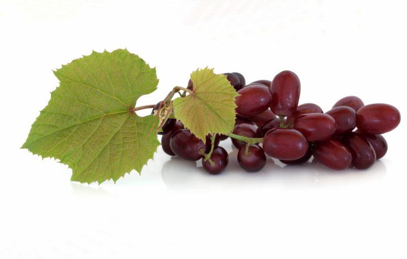 Виноград Кишмиш лучистый: описание сорта, посадка и уход