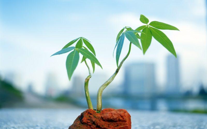 Вегетативные органы растений – что это такое, какие виды