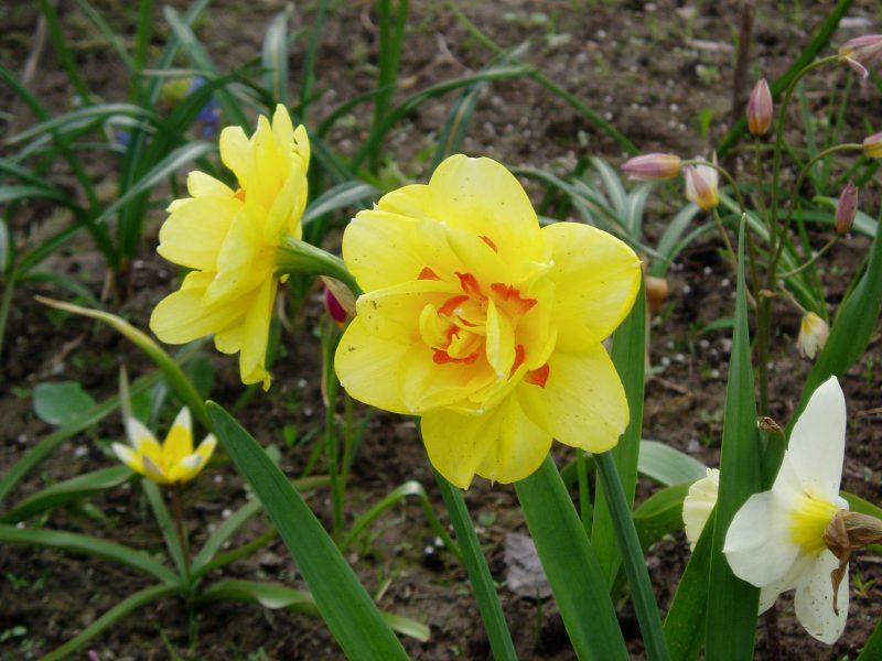 Цветковые растения: описание, строение, размножение
