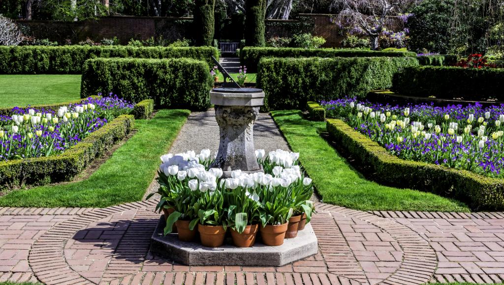 Тюльпаны: посадка, выращивание и уход в открытом грунте