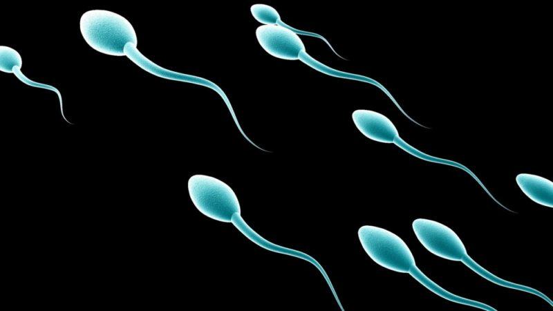 Состав спермы: что входит в состав спермы человека, как улучшить её качество