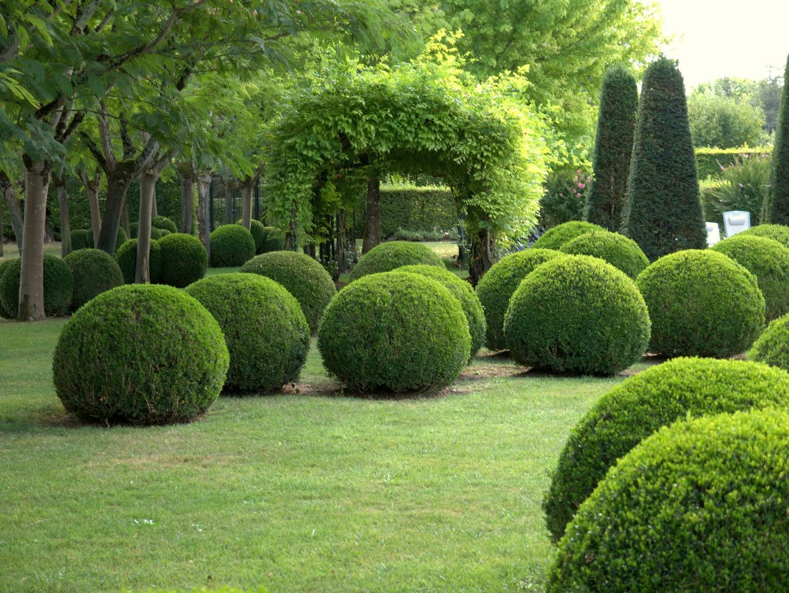 Вечнозеленые кустарники для сада: описание, виды, посадка, выращивание и уход