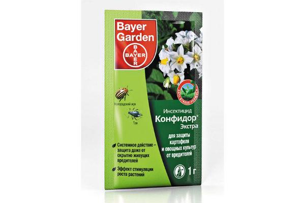 Гименокаллис (Hymenocallis): посадка, выращивание и уход в домашних условиях и в саду