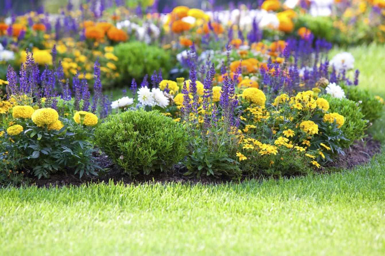 Многолетние садовые цветы: сорта и описания, красивых и неприхотливых в уходе цветов