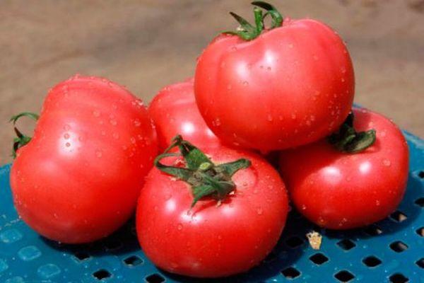 Томат Мазарини: характеристика и описание сорта, выращивание