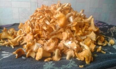 почищенные лисички